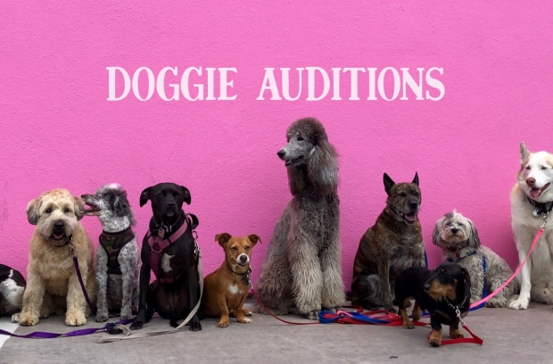 doggie auditions